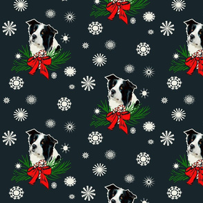 border_collie_Christmas_