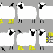 welsh sheep