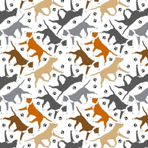 Trotting American Staffordshire Terriers - white