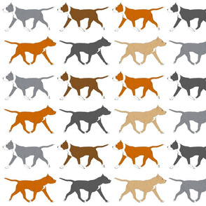 Trotting American Staffordshire Terriers large border