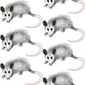 possum_