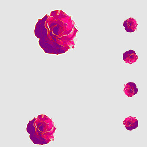 Carolynne's big pink rose 2