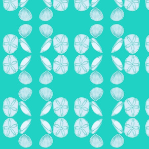 sea shells aqua background