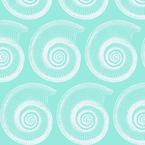 Sea Foam Mollusk