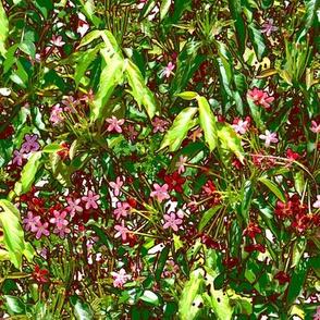 Pink Flowering Vine