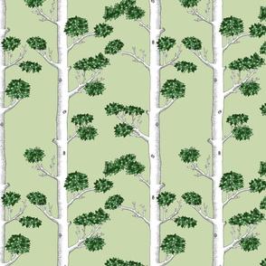 Summer Tree White Trunks