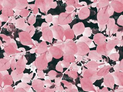 Sakura ~ Ink Wash ~ Petite