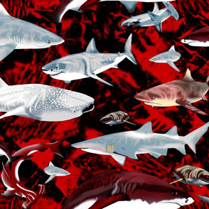 For the Love of Sharks!