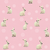 Snowshoe Hare, Pink