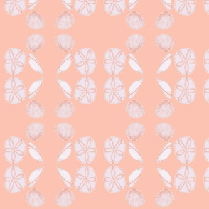 sea shells coral background
