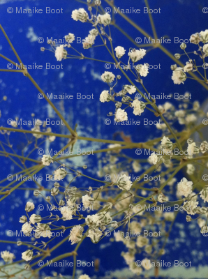 Winter blossom white flowers