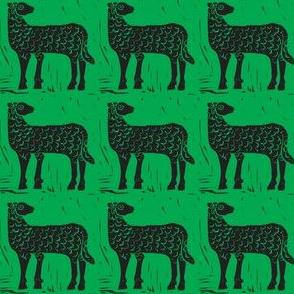 Field of Black Sheep