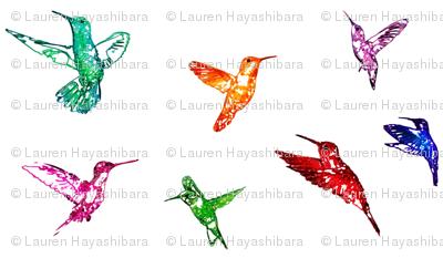 Hummingbirds Rainbow