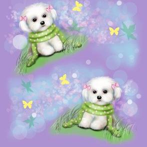Maltese puppy purple