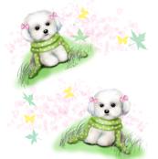 Maltese Puppy White
