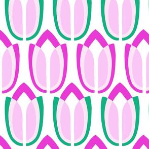 tulipa1°