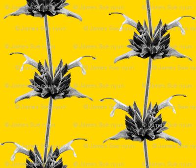 Hummingbird Sage-Monochrome on Yellow