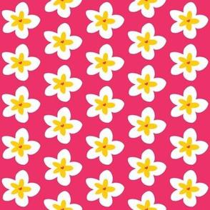 Plumeria on Pink
