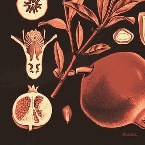 Pomegranates - Tan