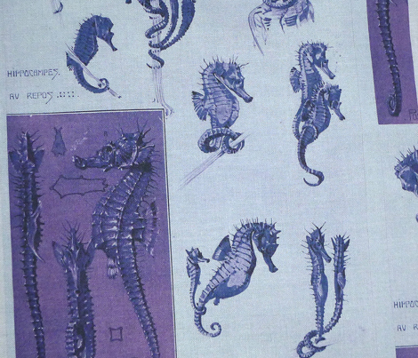 meheut seahorse purple