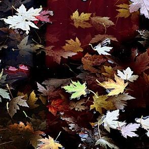 Fall Puddle