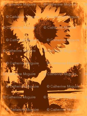 Sunflower Daguerotype