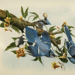 Blue Birds...
