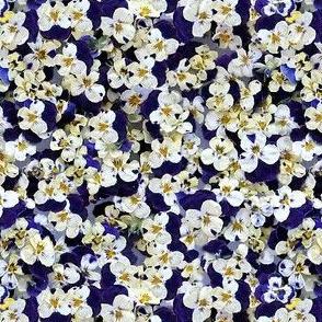 Viola Confetti