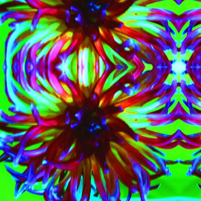 Colorful Spider Mum 2013