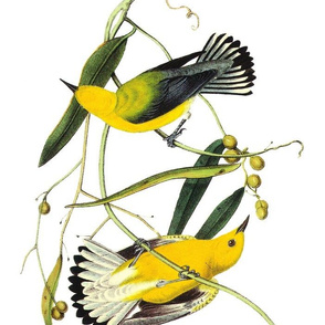 Audubon Bird Prothonotary Warbler Yellow