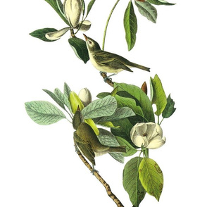 Audubon Bird Vireo