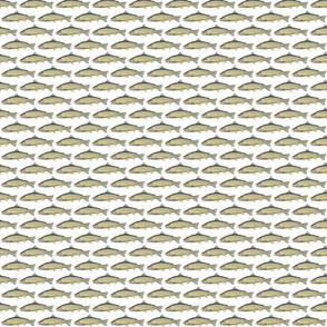 Snakeriver cutthroat trout (Oncorhynchus clarki behnkei)