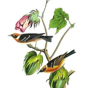 Audbon Bird Warbler
