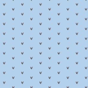 chicken_Silver_Wyandotte_all_blue