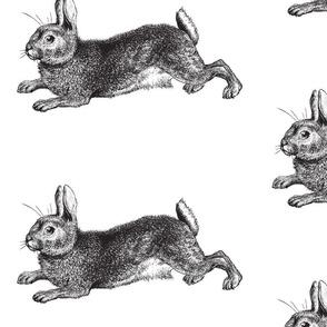 Big Bunny Rabbit Engraving