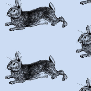 Blue Bunny Rabbit Engraving
