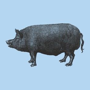 Pig Engraving Blue