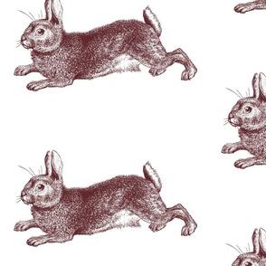 Big Bunny Rabbit Engraving Brown