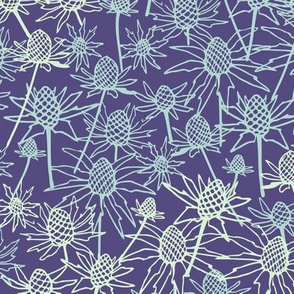 Sea holly on purple