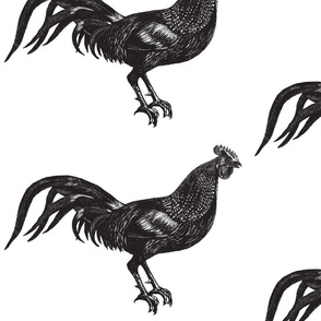 Giant Rooster Engraving
