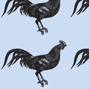 Giant Rooster Engraving Black on Blue