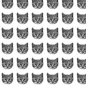 catface b&w