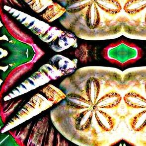 Ocean 5 - Shells
