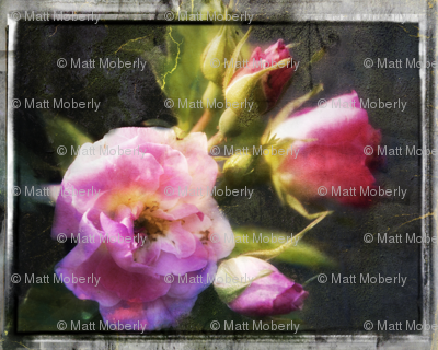 1_rose_4_preview