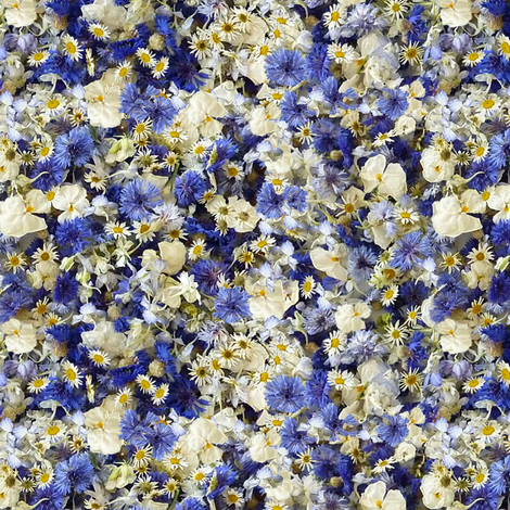 blue bachelor buttons fabric by larkspur_hill on Spoonflower - custom fabric