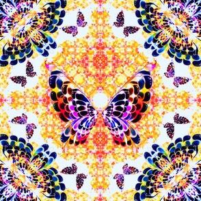 62_Multibright_Butterflies_pt1