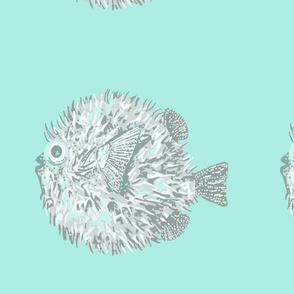 Puffer fish large