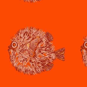 Puffer fish orange