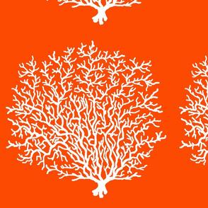 Coral Reef Orange