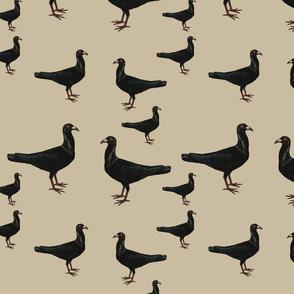 Black_Pigeon_on_Taupe